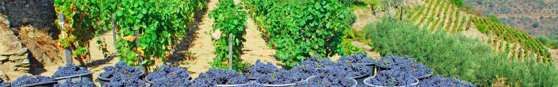 Route des vins Portugal