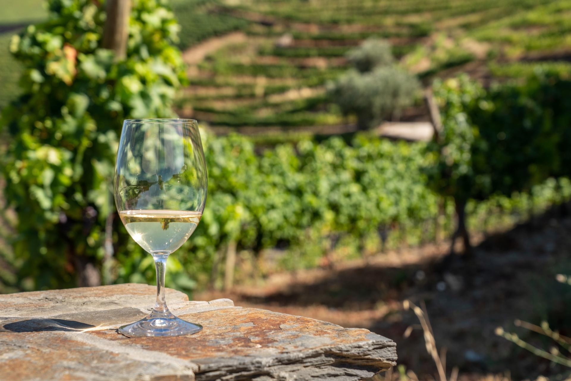 Un verre de vin blanc du Douro sur fond de vignobles